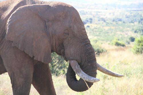 nature wildlife ivory