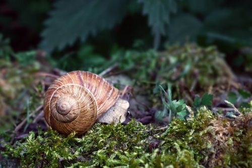 nature animal snail