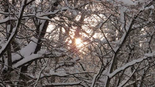 nature winter landscape