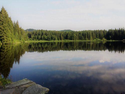 nature moor wetland
