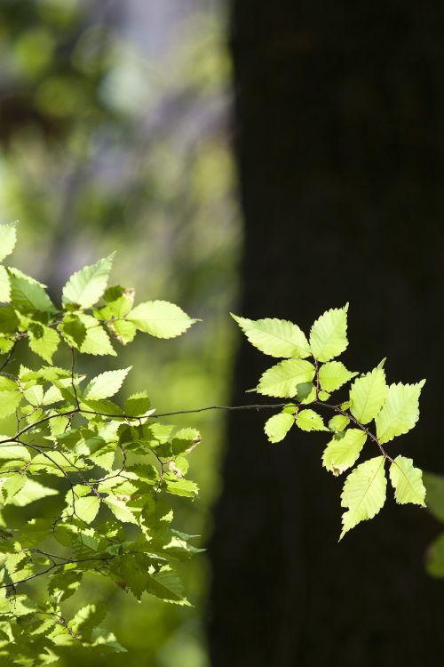 nature wood backlight
