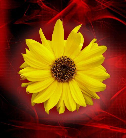 nature flower yellow