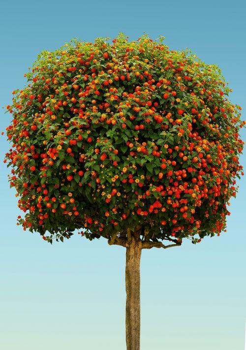 nature tree high-stem
