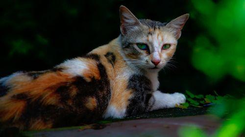 nature animals cat