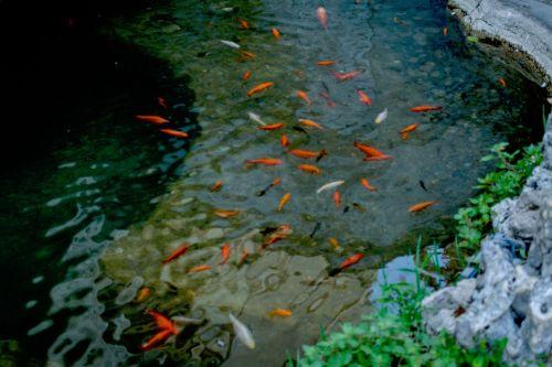 nature water animals