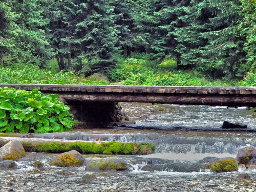 nature footbridge water
