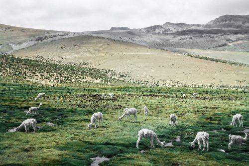 nature landscape animal