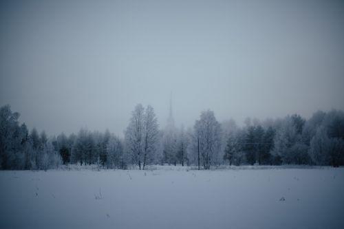 nature landscape forests