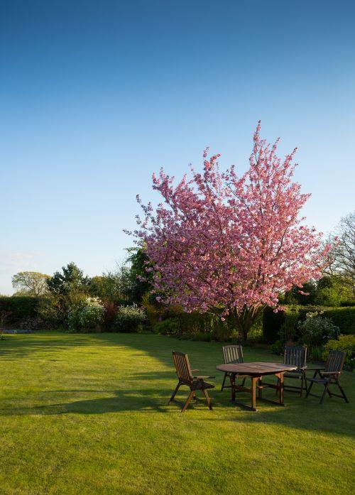 nature garden lawn