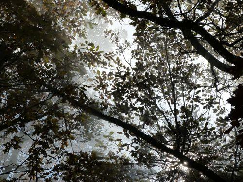 nature branches foliage