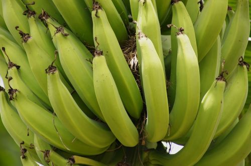 nature clusters bananas