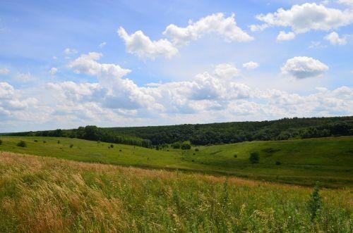 gamta,yar,miškas,laukai,debesys,dangus,vasara,lapai,medis,žalumos,augalas