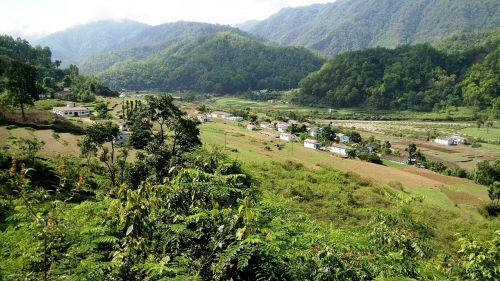 nature india jungle