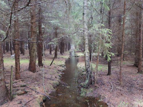 nature water harmony