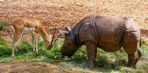 nature animals rhino