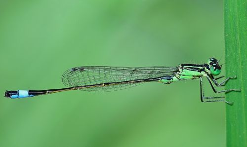 nature damselfly winged insect