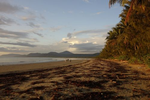nature australia port douglas