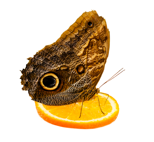 nature animals butterfly