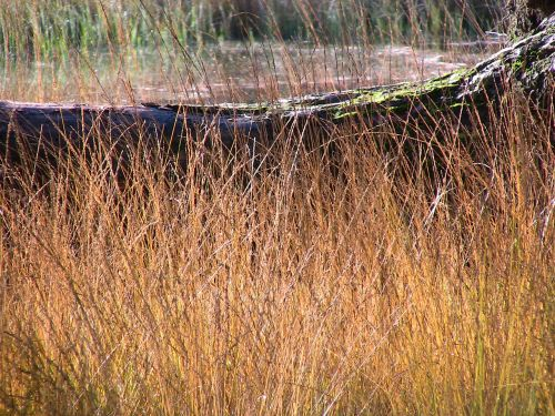 nature grasses structures