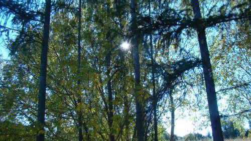nature tree lichtspiel