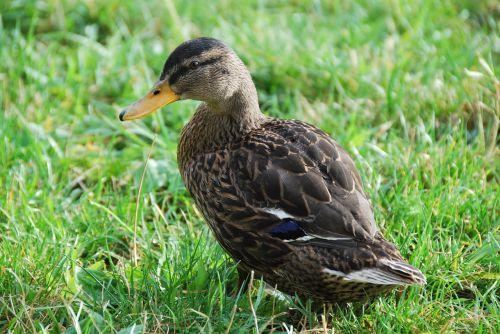 nature animal water bird