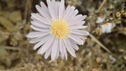 nature flower beautiful flower