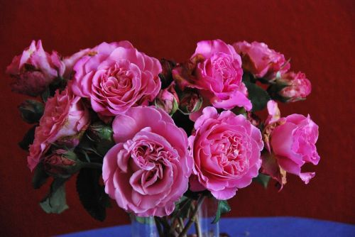 nature flowers roses