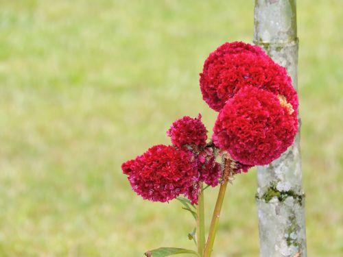 nature amazonas flowers