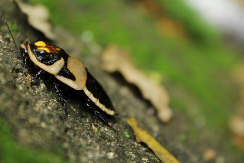 nature animal fauna