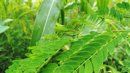 gamta,švieži gamta,lapai,žalias lapas