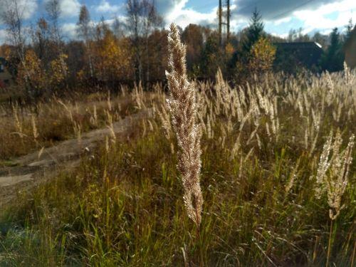nature dacha autumn
