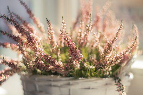 nature background blossom