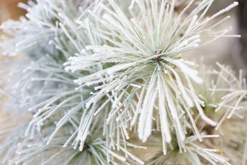 nature winter season