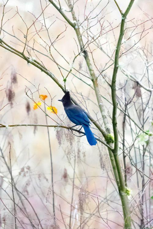 nature bird outdoors