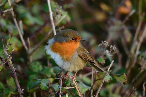 nature wildlife bird