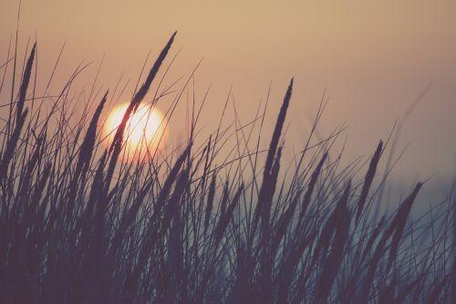 nature sun grass