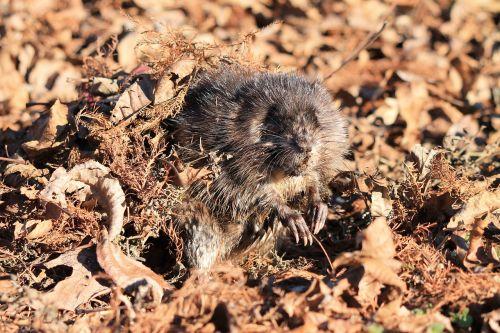 nature wildlife animal
