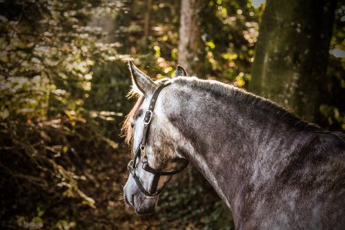 nature,mammal,animal,grass,tree,gelding,wood,forest,light,sun,horse,halter