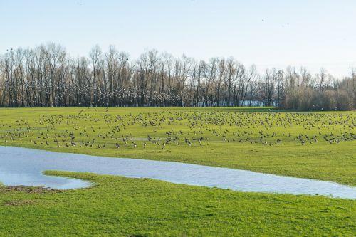 nature landscape grass