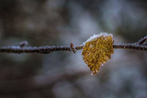 nature autumn winter