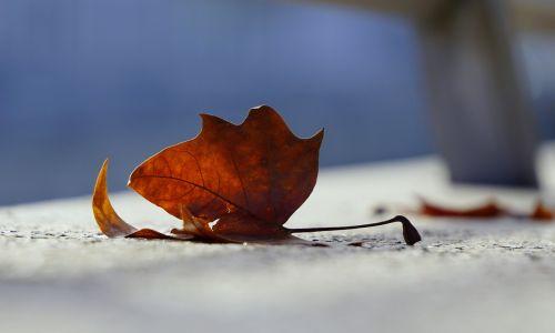 nature cold autumn