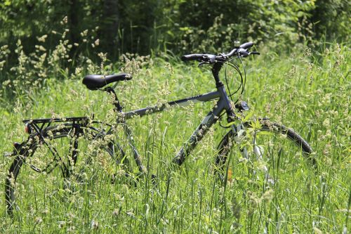 nature wood grass
