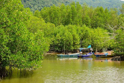 nature mangrove mangrove forest