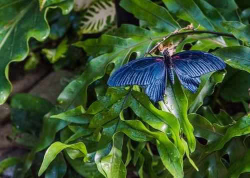 nature leaf flora