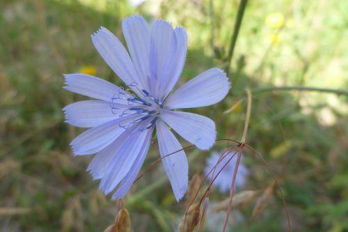 gamta,augalas,gėlė,vasara,lapai,gražus,laukinės gėlės,šviežias,žiedlapis,Iš arti,žydėti,šviesa,gėlių,veja,lauke,sodas,sezonas