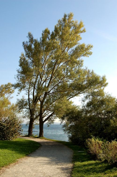 nature trees autumn
