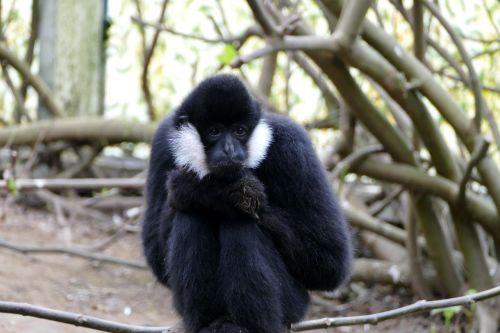 nature wood monkey
