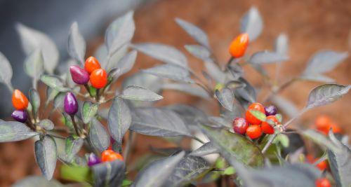 nature,leaf,flora,flower,garden,season,closeup,outdoors,color,little,food,beautiful,shrub