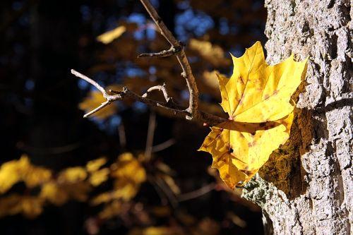 nature leaf tree