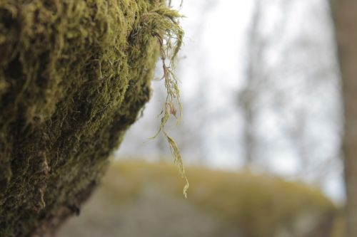 nature tree environment